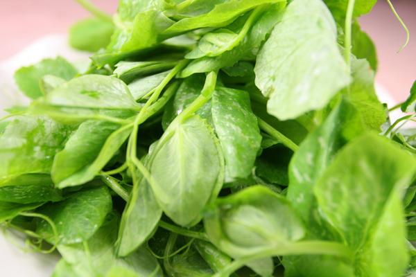 Các loại rau Sapa