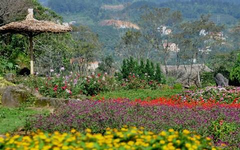 Mùa hè, Sapa trăm hoa đua nở