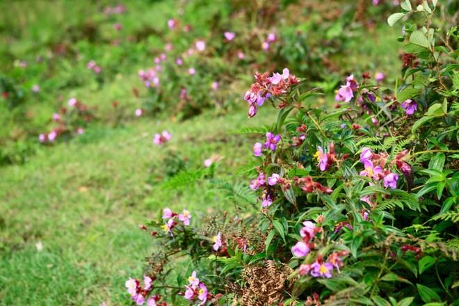 Những bông hoa rực rỡ tô điểm thêm cho khung cảnh thác Tình yêu