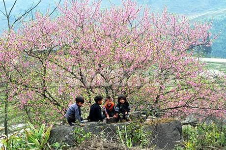 Hoa đào ở Mai Châu