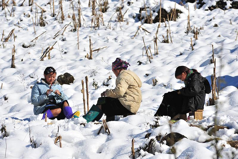 Mùa đông trên núi rừng Sapa